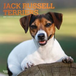JACK RUSSELL TERRIER - 2019 WALL CALENDAR - BRAND NEW - DOG 400811