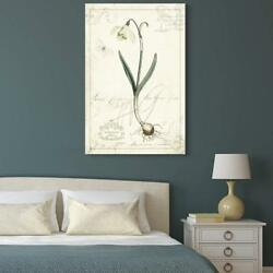 Wall26 - Vintage Style Narcissus Plant Gallery - Cvs - 32x48 Inches