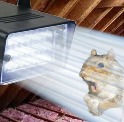 Attic Squirrel Repellent Flashing Strobe Light. A Squirrels Worst Nightmare