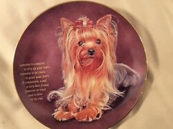 Danbury Mint Yorkshire Terrier Someone to Comfort Limited Edition Plate A1828