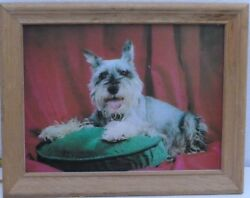 VINTAGE FRAMED THREE DIMENSIONAL ART PRINT TRAMP A LONG HAIRED WIRED TERRIER DOG