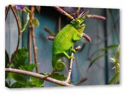 Lizard Horned Reptile Wildlife Zoo Green Canvas Wall Art Picture Print
