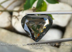 Most Rarest - World's Largest Musgravite - 16 ct - Transparent - Srilanka - SSEF