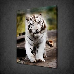 White Tiger Canvas Print Picture Wall Hanging Art Free Fast Uk Delivery