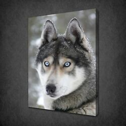 Siberian Husky Canvas Print Picture Wall Hanging Art Free Fast Uk Delivery