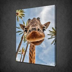Funny Looking Giraffe Canvas Print Picture Wall Art Home Decor Free Delivery