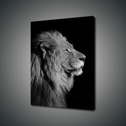African Lion Wild Life Canvas Print Picture Wall Art Free Uk Delivery