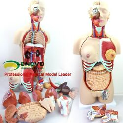 85cm Deluxe Dual-sex Torso Model With Opened Back 29 Part Human Anatomy Model