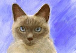 NEW BCB Siamese Cat Blue Print of Painting ACEO 2.5 x 3.5 Inches