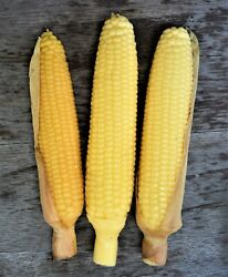 3 Vintage Yellow Corn Cob Scented Wax Life Size Candles Thanksgiving Fall Decor