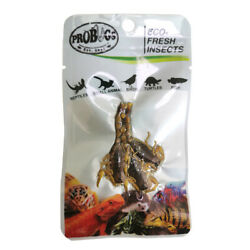 PROBUGS vacuum sealed SCORPION feeder insects for bearded dragons reptiles li...