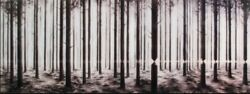 Pejac Linea Lenticular Art Print Rare And Sold Out