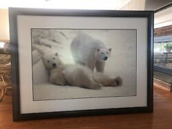 Thomas D. Mangelsen Signed Framed 1992 Lazy Boys Picture Limited Edition 714