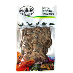 ROBUGS vacuum sealed BLACK SOLDIER FLY feeder bearded dragons reptiles lizards
