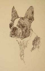 Boston Terrier dog art portrait drawing PRINT 57 Kline adds dog's name free GIFT