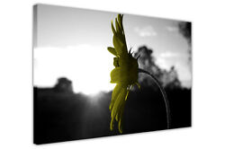 Black And White Prints Yellow Flower Canvas Pictures Wall Art Framed Posters