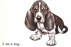 Boswell BASSET HOUND - I am a Dog - SWEET PUPPY Matted Vintage Art Print 1958