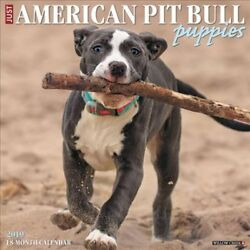 2019 American Pit Bull Terrier Puppies Wall Calendar by Inc. Willow Creek...