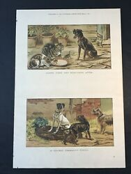 Antique Print DOGS & CATS S.T Dadd Supplement THE ILLUSTRATED LONDON NEWS 1886