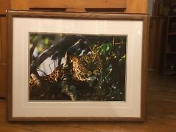 Signed Thomas D. Mangelsen Framed Photo The Waiting Game African Leopard