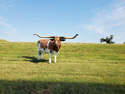 Texas Longhorn Steer Life Size Statue 10 Ft