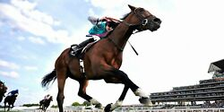 Frankel Ridden By Tom Queally 37 Horse Racing Panoramic Photo Prints