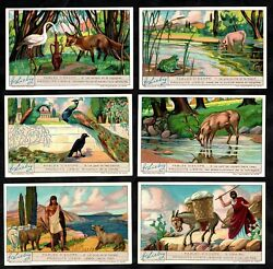 Aesops Fables Liebig Cards Set 1932 Frog Fox Stork Wolf Crow Peacock Ox Mule Ass
