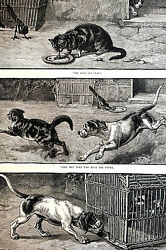 Dadd DOG CHASING CAT and BIRD WINS the FOOD 1886 Antique Engraving Print Matted