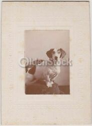 Handsome Jack Russell Terrier Dog Proudly Posed Antique Snapshot Photo on Board