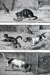 Dadd BIRD in CAGE Outsmarts DOG and CAT Bird Gets Food 1886 Antique Matted Print