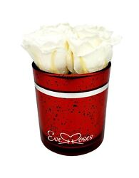 White Preserved Roses Gift|birthday|wedding|christmas|long-lasting|all Occasions
