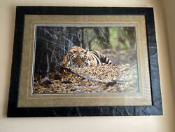 Images Of Nature - Mangleson Bad Boy Of The Forest Signed And Numbered