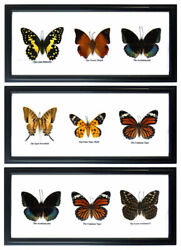3 X 3 Vintage Wood Framed Display Real Butterfly Insect Taxidermy Collection Art