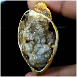 Natural Snail Fossil Druzy Agate Expensive Stone Fancy Cab 181.25cts 29x55x21mm