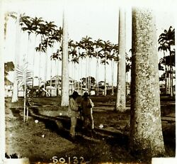 Cambodia Palm Trees Photo Stereo Vintage Plate Glass Ca 1910
