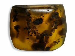 Wow Burmese Amber With Insect And Plant Inclusions Burmite Fossilsandnbspandnbsp [p29]
