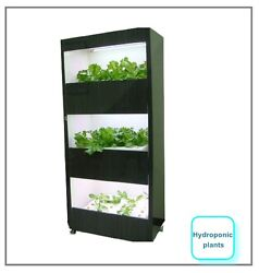 SST Hydroponic Plant sst