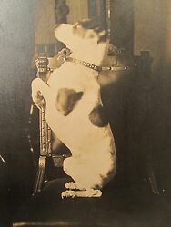 ANTIQUE VICTORIAN ARTISTIC POSE DOG PROFILE JACK RUSSELL TERRIER ? COLLAR PHOTO