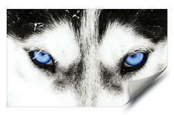 Blue Eyed Husky Dog Grey Wolf HD Vinyl Wall Art Poster Decal Sticker Picture