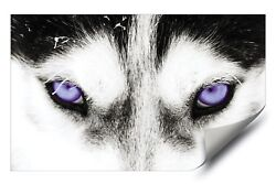 Purple Eyed Husky Dog Grey Wolf HD Premium Vinyl Removable Wall Art Poster Decal