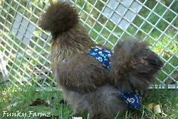 Diaper for Chickens  silkies  bantams... Custom made. 80+ designs.