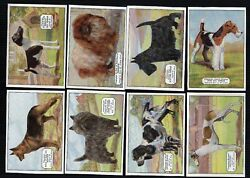 Tobacco Cigarette cards Champion Dogs 1934LABRADORENGLISH SHEEPDOGTERRIERS