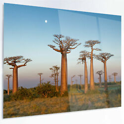 Design Art 'Field of Boababs under Calm Sky' Photographic Print on Metal