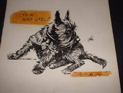 Signed Advertising Illustration Drawing by Morgan Dennis Scottish Terrier Dog #1
