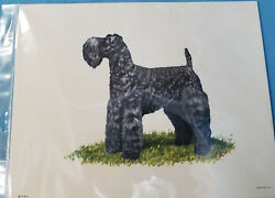 Kerry Blue Terrier Dog Lithograph Art Print Picture by Ole Larsen 1950's