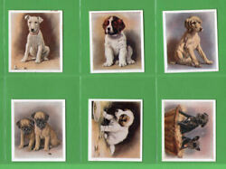 Tobacco Cigarette cards set Dogs - Our Puppies 1936 Papillon PugTerriers etc