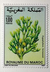 Yt 1031 Stamp Morocco Morocco New MNH Flowers Climate