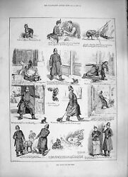 Original Old Antique Print 1886 Police Stray Dogs Black Tan Terrier Stree 19th