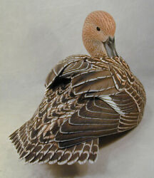 Life Size Northern Pintail/female Original Wood Carving