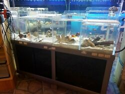 Complete Used Cascading Aquarium Complete With Sump, Pump And Uv